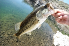 texas-bass-fishing-guide-2015-3