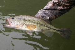 texas-bass-fishing-guide-2015-4