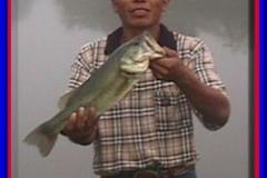 pond_bass1