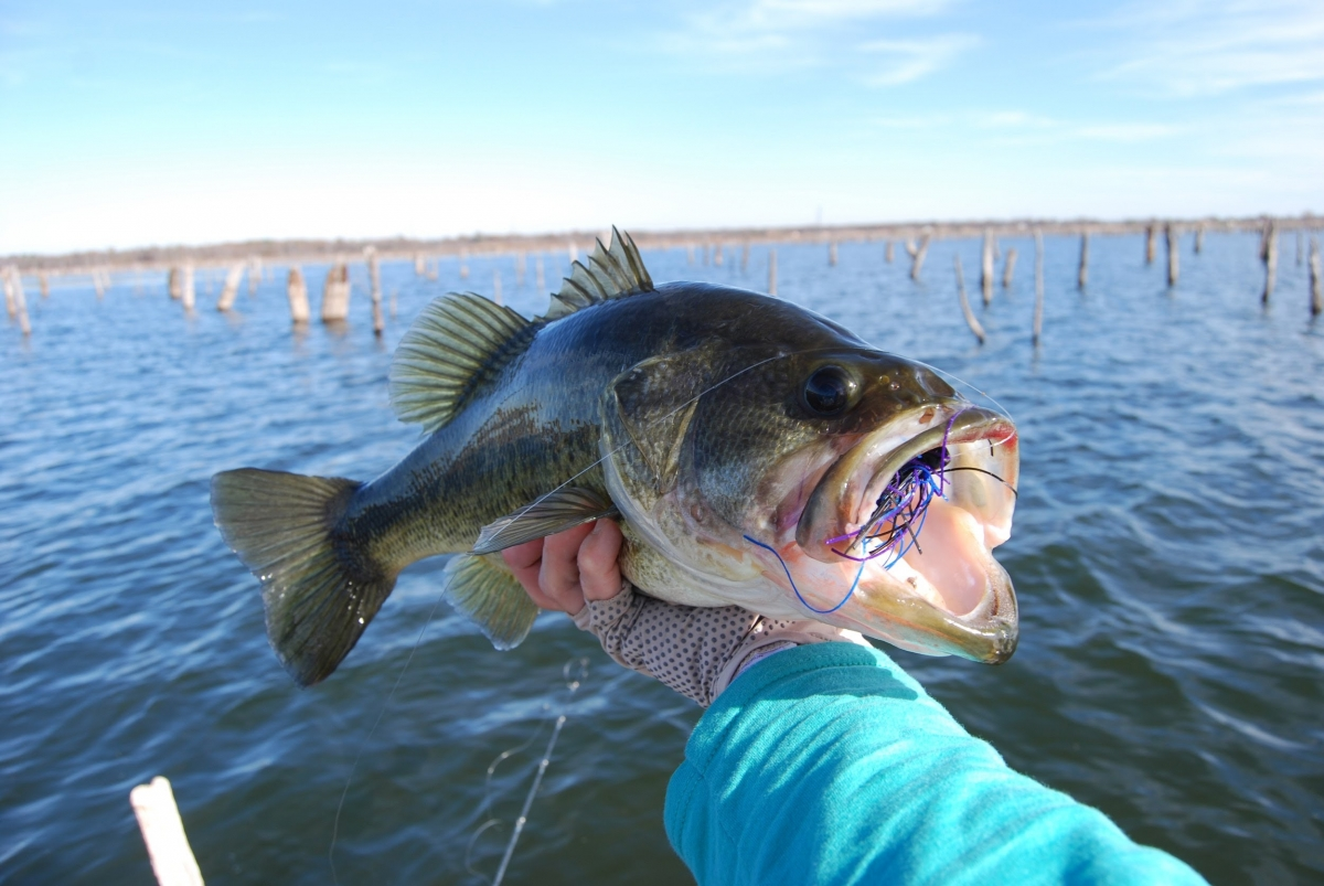 Fly fish texas to feature seminars gear fishing texas for Texas bass fishing guides