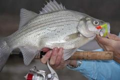 texas-bass-fishing-guide-2013-4