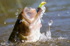 texas-bass-fishing-guide-2015-2