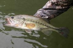 texas-bass-fishing-guide-2015-4