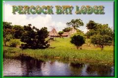 peacock_bay