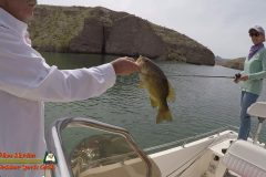 Lake-Mohave-Bass-Fishing-Anafi-03-31-2020