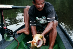 rio_negro_guide_catfish