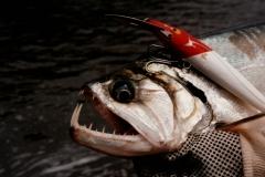 rio_paragua_payara_fishing_2